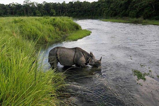 Budsjett tur i Chitwan og Pokhara...