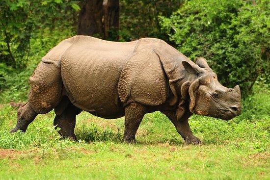 Rhino and Tiger Safari in Kaziranga...