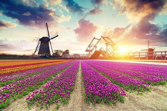 Campo holandés y campo de tulipanes.