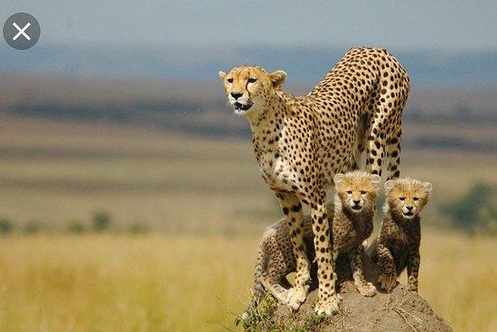 De Wildt Cheetah og Wildlife Centre...