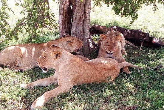 来自内罗毕的3天Maasai Mara野生动物园