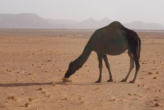 Private 6 days tour from Marrakech...