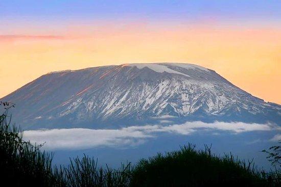 Kilimanjaro Suba Rota Umbwe 6 Dias