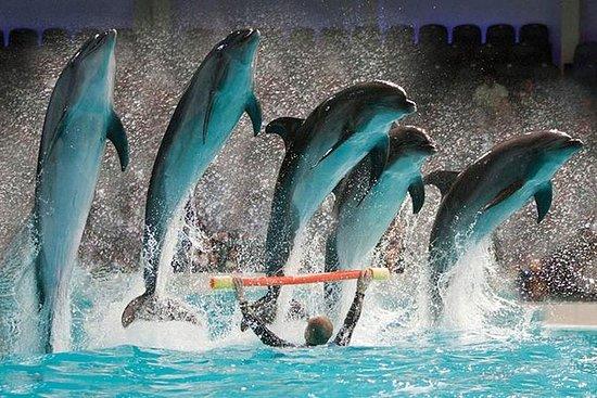 Billets Dubai Dolphinarium