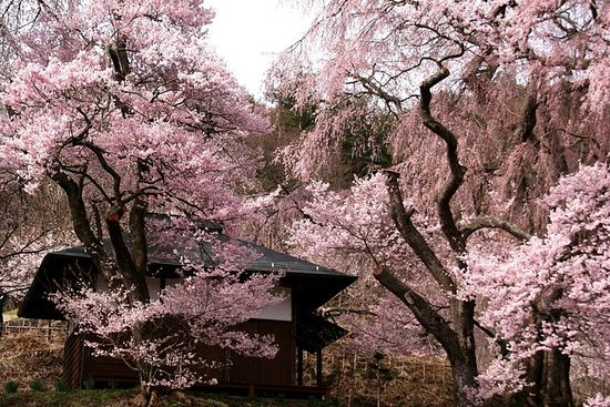 仅限1天活动:TAKATO CASTLE PARK CHERRY...