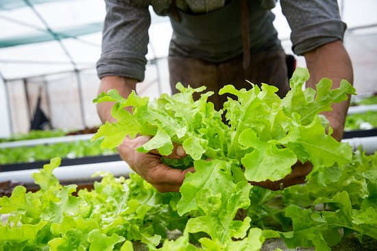 Forest Fiends Urban Farm