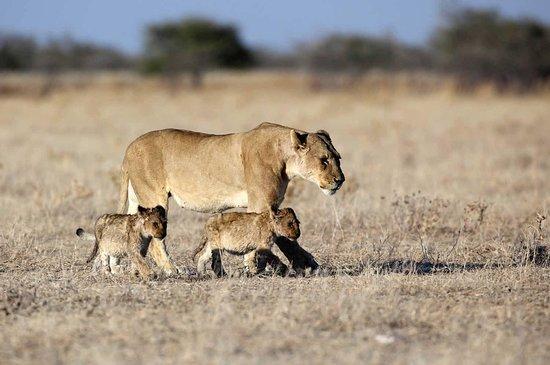 Nali Safaris Namibia