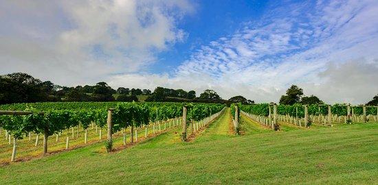 Modbury, UK: Calancombe Estate Vineyard