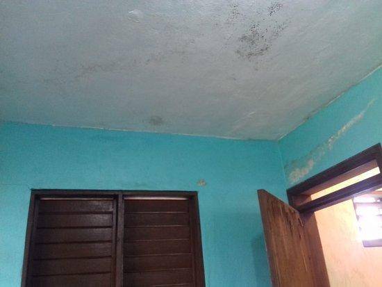Schimmel und abgeblätterte Farbe an den Wänden - Picture of Green ...