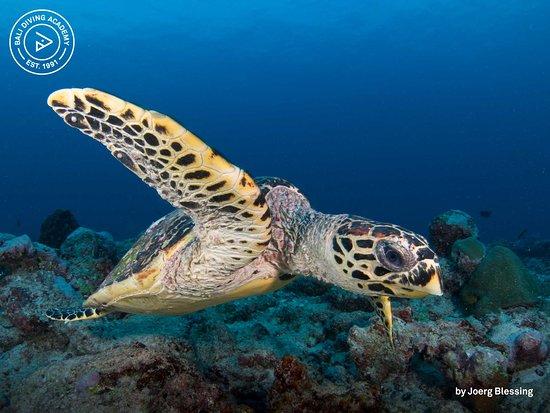 蓝梦岛巴厘潜水学院