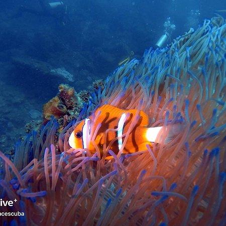 Nemo, its you!