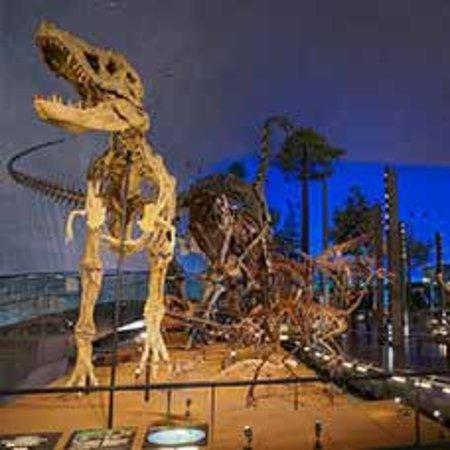 恐竜博物館。あわらより車で75分。