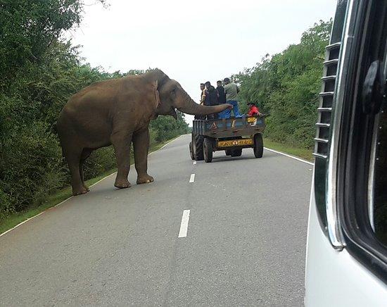 Elefanten fordern ihren Wegezoll