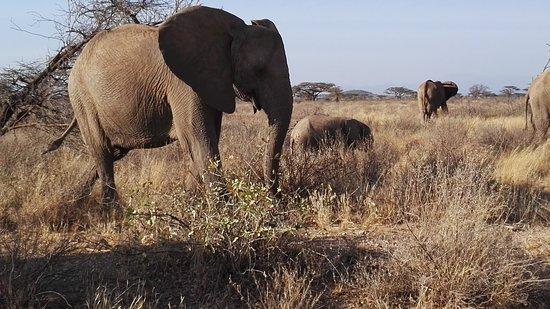 African Safaris Adventures: The rugged, beautiful semi-arid Samburu ecosystem.
