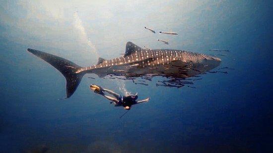 Dive Seacret