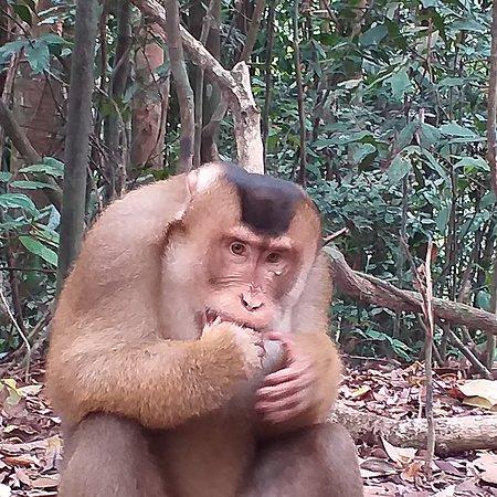 Storbritannia: Bukit lawang  trekking whatsapp  081361512800