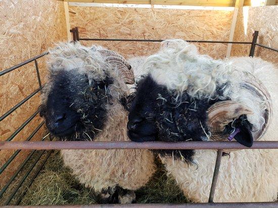 Cute Farm Experience