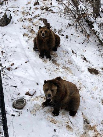Cheyenne Mountain Zoo ภาพถ่าย