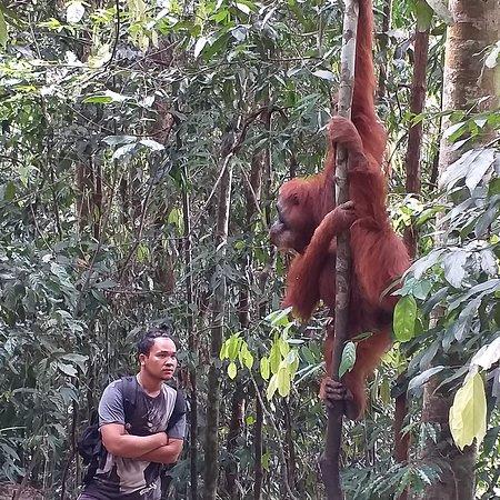 Storbritannia: Trekking bukit lawang whatsapp 081361512800 nanang