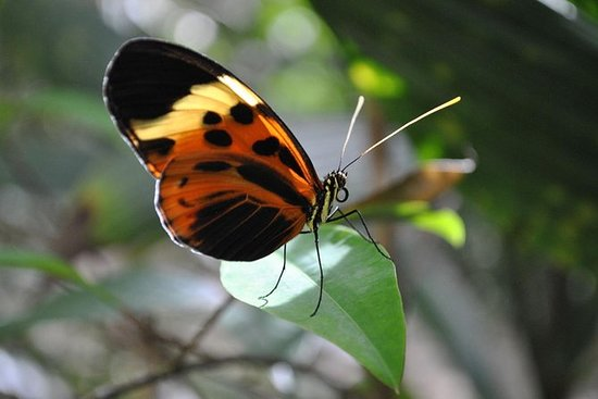 Aventura Napo Amazónica De 3 o 4 Días