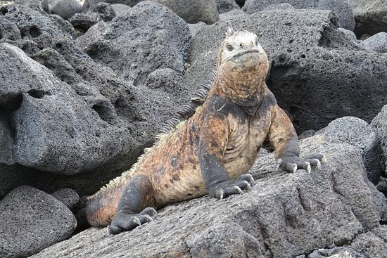 基多9日加拉帕戈斯群岛跳跃和基多之旅