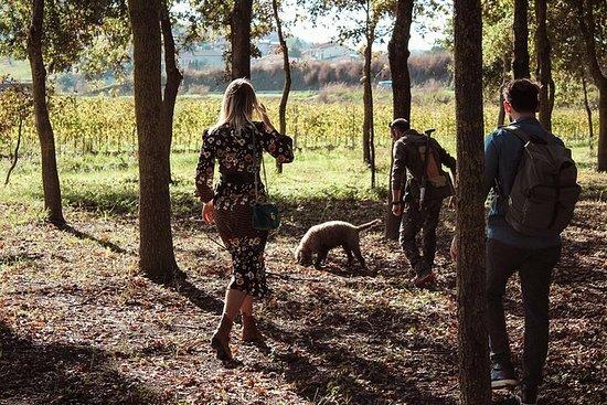 在托斯卡納享用葡萄酒和午餐的松露狩獵體驗