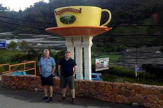 Cameron Highlands: Mossy Forest