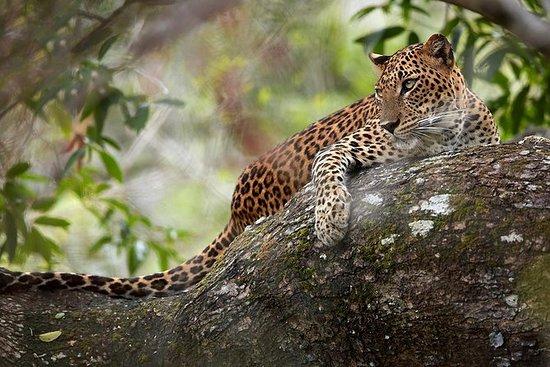 Day Tour to Wilpattu National Park...