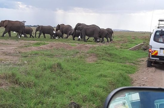 Private Wildlife 5 Day Safari: Tsavo East, Tsavo West & Amboseli: Tsavo East, Tsavo West and Amboseli Private Wildlife 5-Day Safari from Mombasa