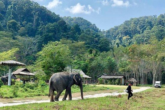 Etisk tur på Phuket Elephant Park