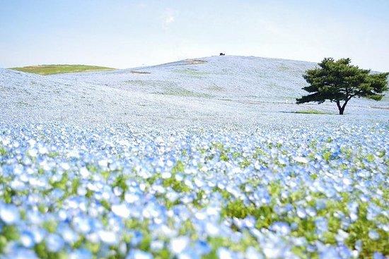 Parque da flor de Ashikaga & vista da...