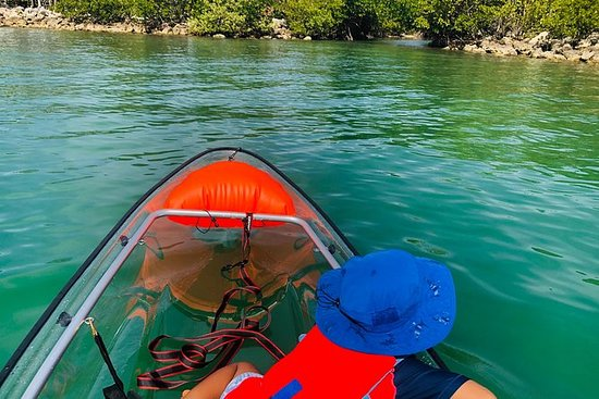 Clear Kayak Tour Miami - convierte la...