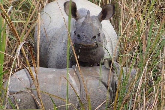 Safari por la selva en Chitwan con...