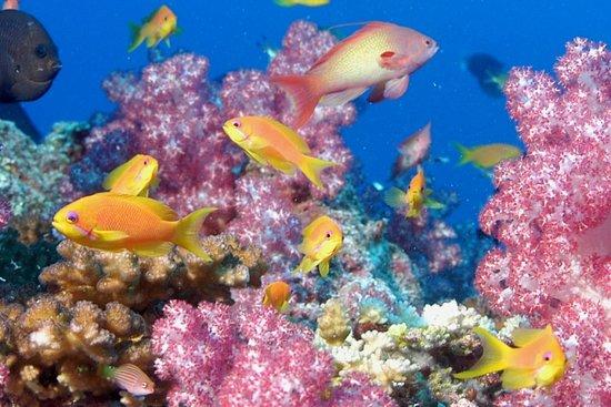 Praslin Pro Divers