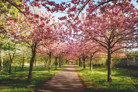Bald ist es wieder soweit: die Kirschblütenzeit!  Ich habe schon die ersten Blüten sich recken sehen, unglaublich früh in diesem Jahr. Auch in Berlin gibt es tolle Stellen, an denen man die Kirschblüte bewundern kann. Im Blog verrate ich die schönsten Stellen unter https://blickgewinkelt.de/kirschbluete-berlin/.