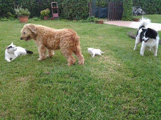 Latignano, إيطاليا: Alcuni dei nostri animali... i due gatti: Spettro e Minou; i due cani: Tequila e Charlie