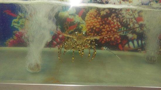 King Seafood Photo