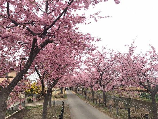 Kawazu Sakura Ajisai Line