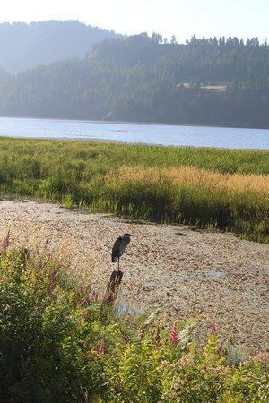 Between the Herons, Eagles, Osprey, Moose, Deer, Turtles, Beavers, etc.  this is nature at its best!