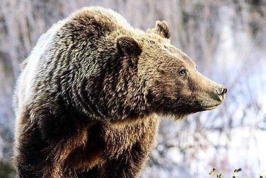 为期4天的黄石公园和大提顿国家公园野生动物探险