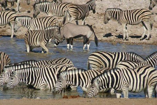 3 jours Safari Wildlife Etosha...