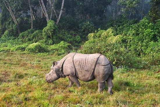 Tour privato di 3 notti in Chitwan
