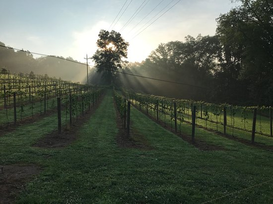 Stroudsburg, Pensylwania: Sunrise in the vineyard during a morning walk.