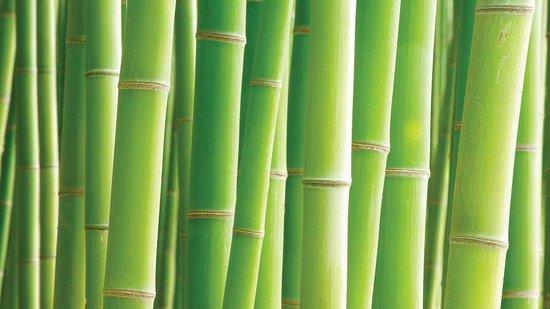 Bamboo Spa Center