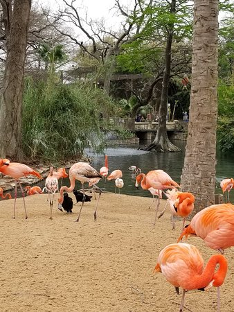 San Antonio Zoo - 2019 All You Need to Know BEFORE You Go (with ...