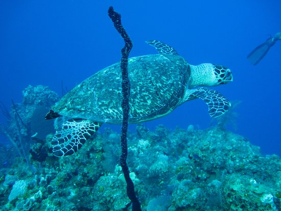 Turtle swimming by at Eagle's Nest