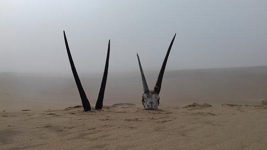 Swakopmund, Namibia: Oryx horns