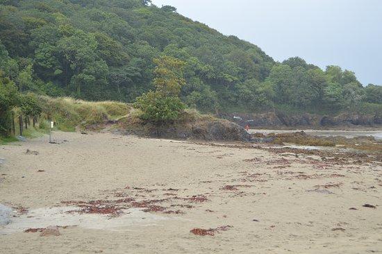 Old Head Beach