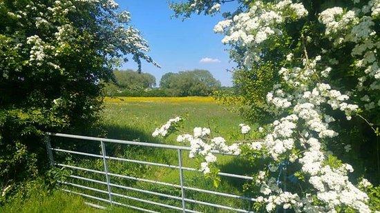Spring over the meadows