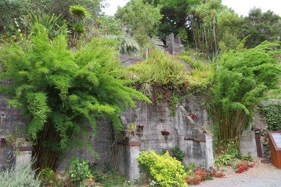 Whangarei Quarry Gardens: In the Quarry
